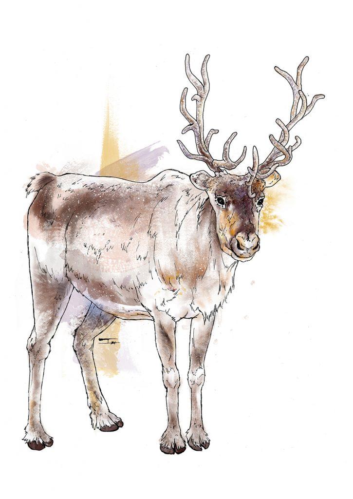Reinder