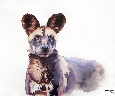 Wild dog watercolor in tables