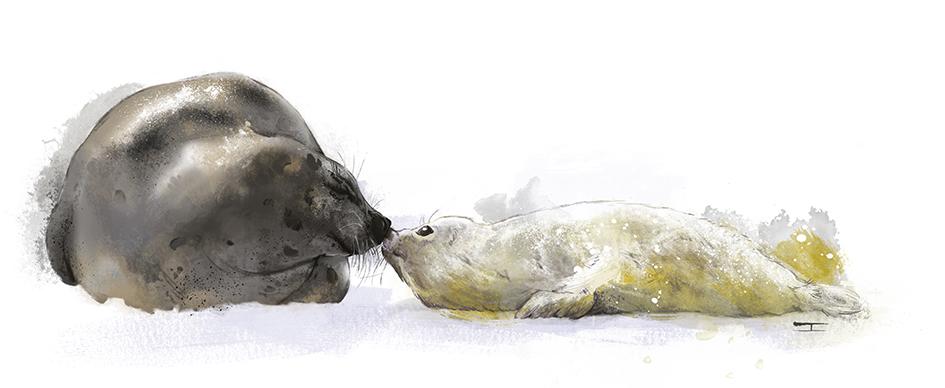 focas pías nueva