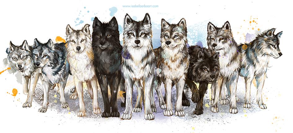lobos manada final